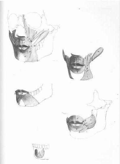 Kako nacrtati usta uz pomoć perspektive i anatomije (drugi dio)
