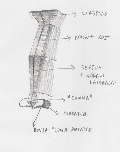 Kako nacrtati nos uz pomoć anatomije (drugi dio)