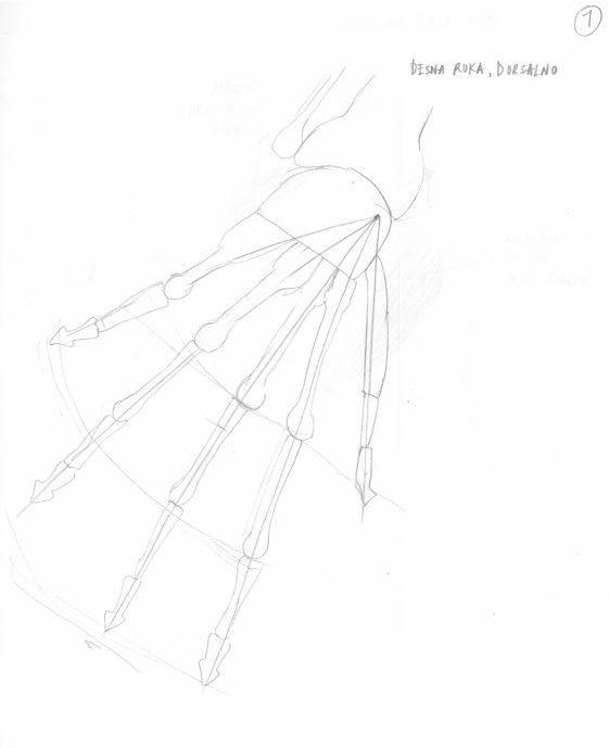 Kako nacrtati ruku uz pomoć anatomije (četvrti dio)
