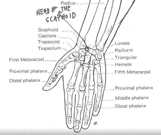 Kako nacrtati ruku uz pomoć znanja anatomije