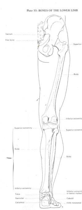 Šest zakona Sie Hoa ili kako nacrtati nogu (sedmi dio)