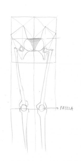 Šest zakona Si Hoa ili kako nacrtati nogu (osmi dio)