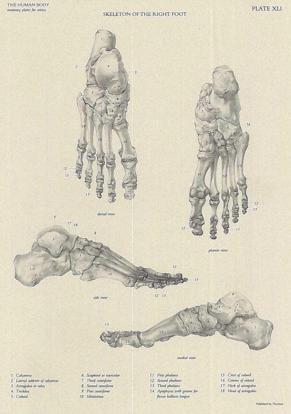 Kako nacrtati stopalo