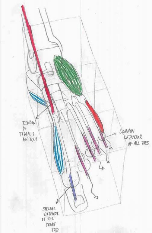 Kako nacrtati stopalo (šesti dio)