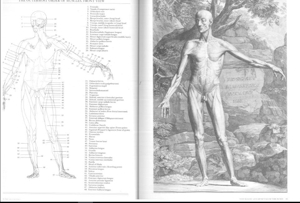 Kako nacrtati rameni pojas (peti dio)